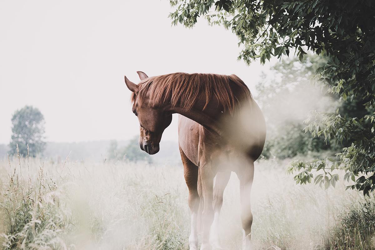 Kathrin Peschel Pferdefotografin Berlin Brandenburg Havelland